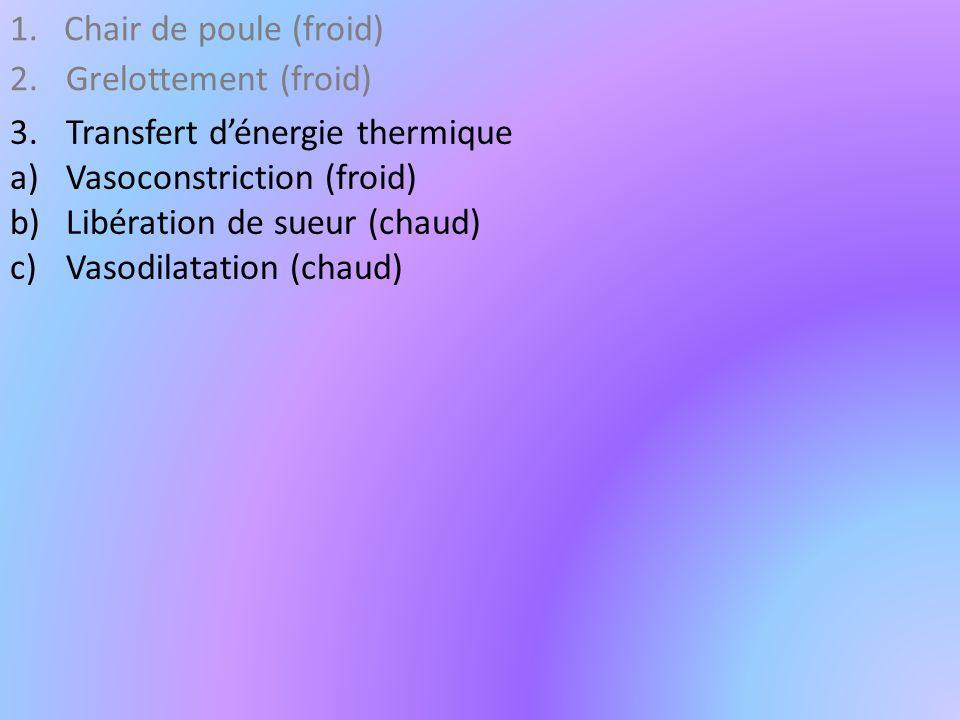 Chair de poule (froid) Grelottement (froid) Transfert d'énergie thermique. Vasoconstriction (froid)