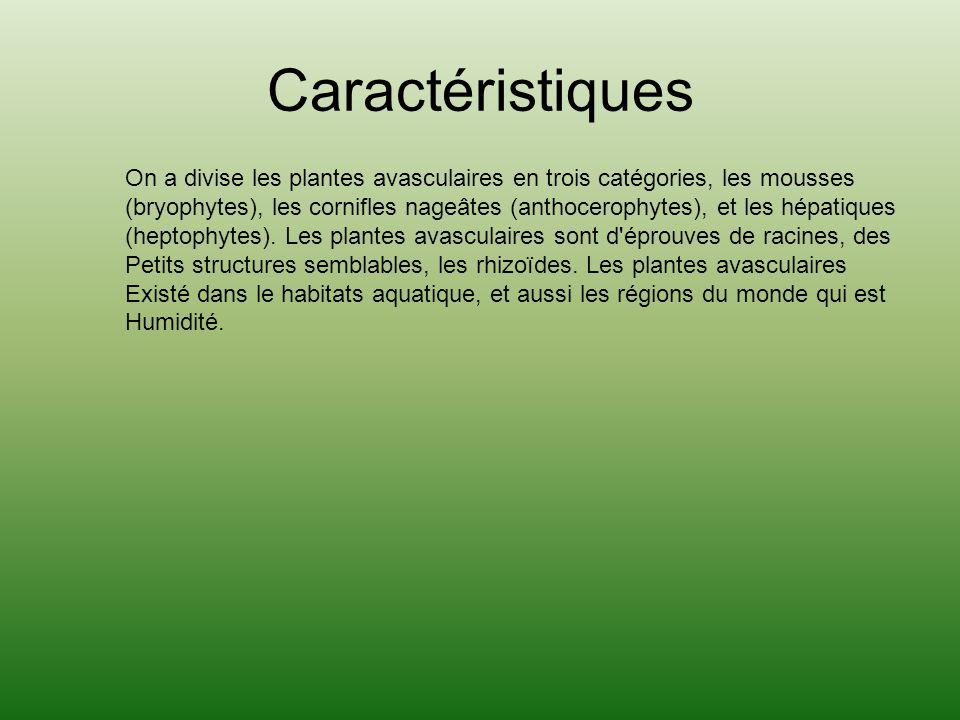 Caractéristiques On a divise les plantes avasculaires en trois catégories, les mousses.