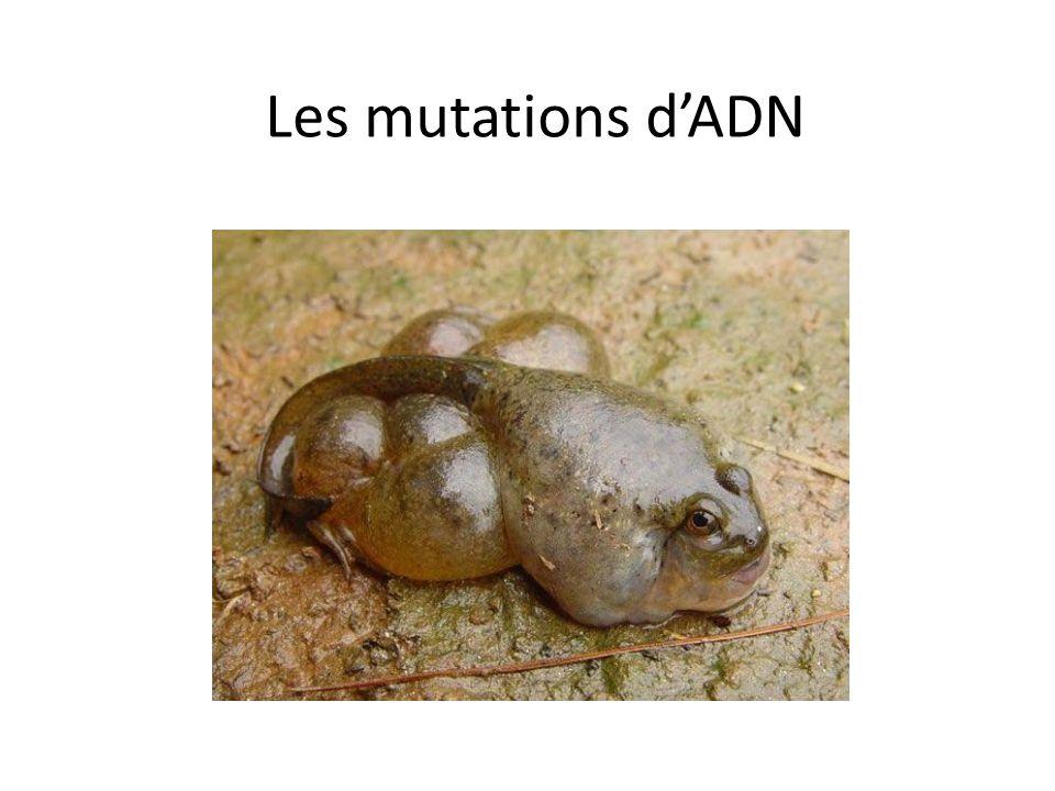 Les mutations d'ADN