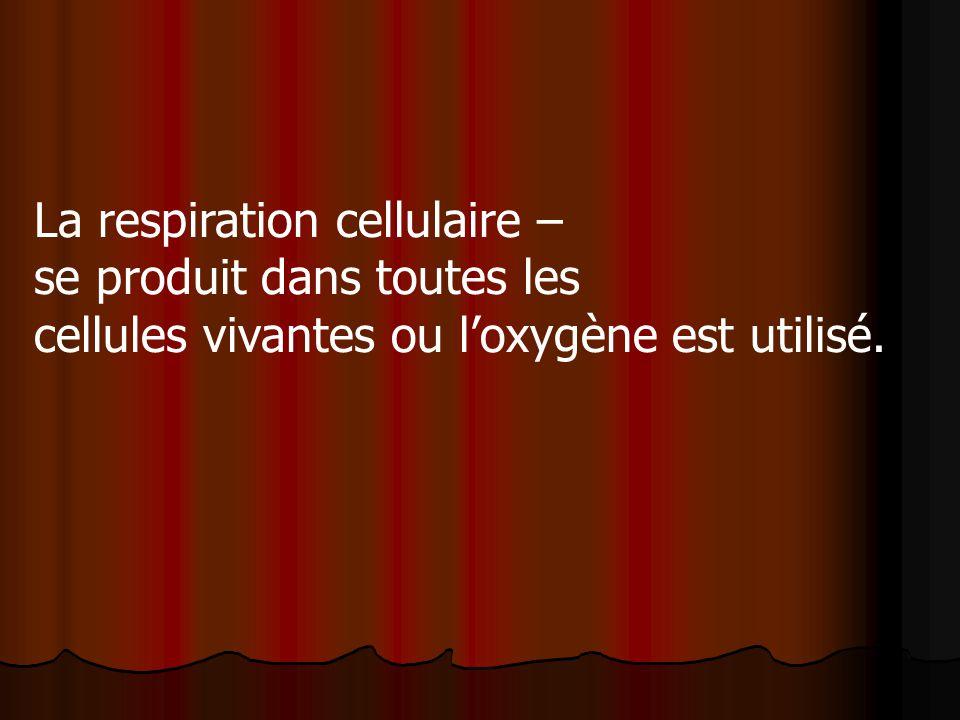 La respiration cellulaire –