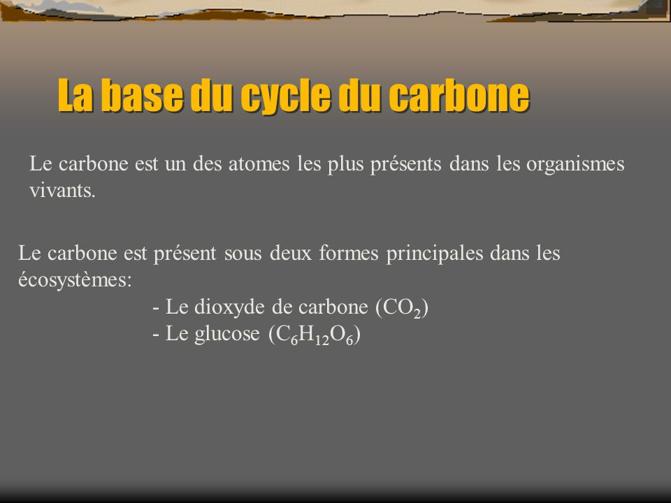 La base du cycle du carbone