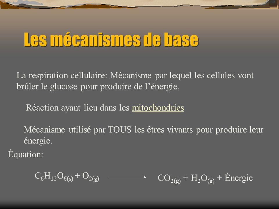 Les mécanismes de base La respiration cellulaire: Mécanisme par lequel les cellules vont brûler le glucose pour produire de l'énergie.