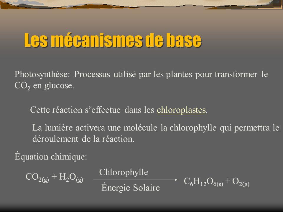 Les mécanismes de base Photosynthèse: Processus utilisé par les plantes pour transformer le CO2 en glucose.