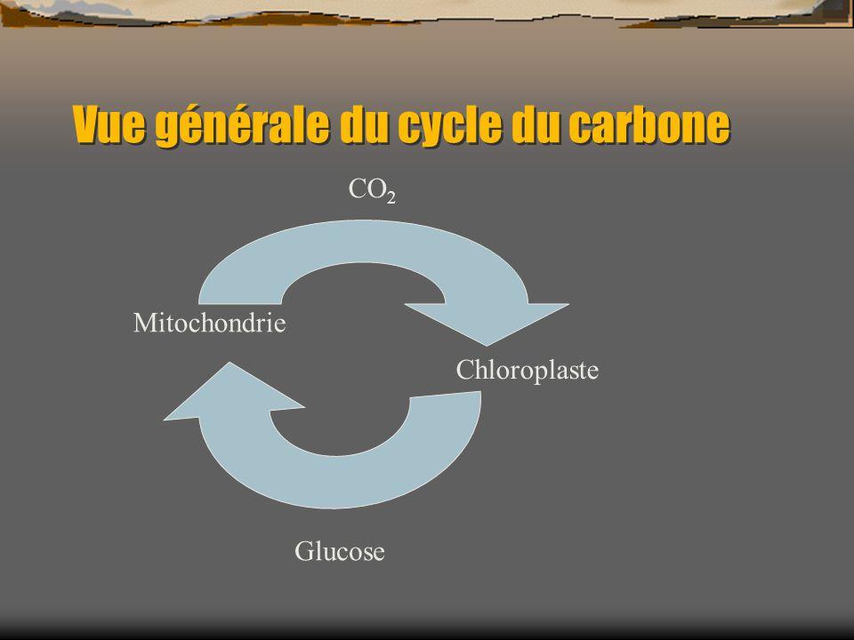 Vue générale du cycle du carbone