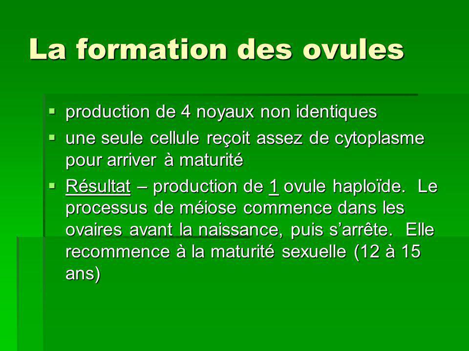 La formation des ovules