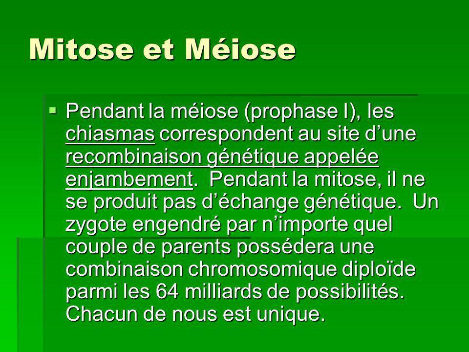 Mitose et Méiose