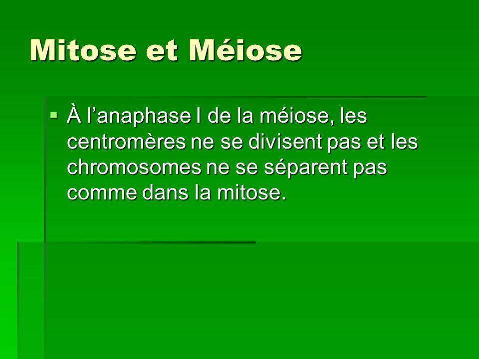Mitose et Méiose À l'anaphase I de la méiose, les centromères ne se divisent pas et les chromosomes ne se séparent pas comme dans la mitose.