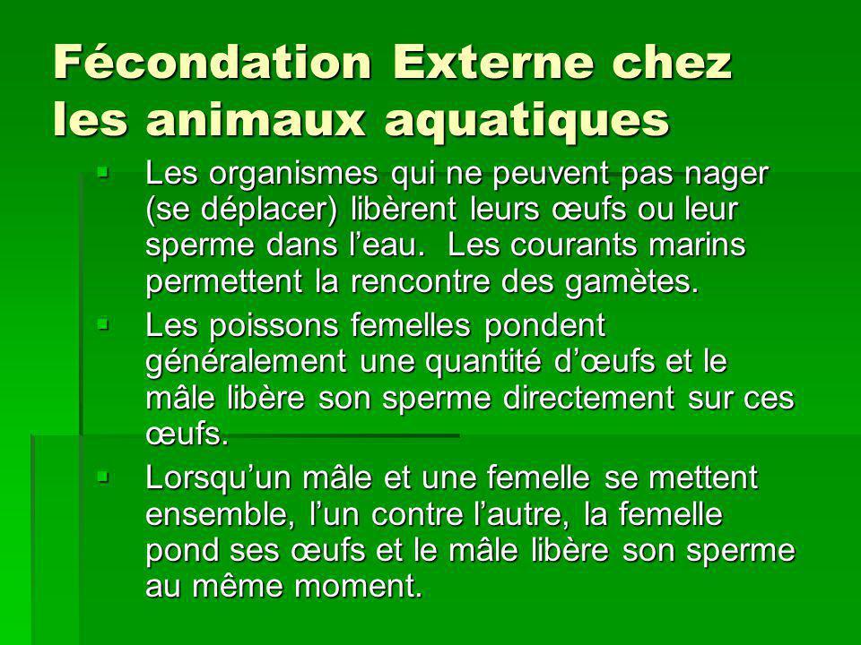 Fécondation Externe chez les animaux aquatiques