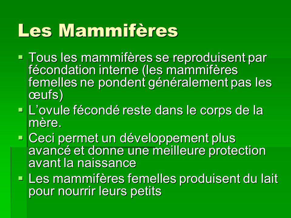 Les Mammifères Tous les mammifères se reproduisent par fécondation interne (les mammifères femelles ne pondent généralement pas les œufs)
