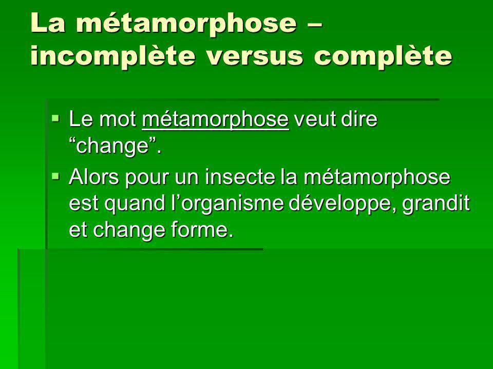 La métamorphose – incomplète versus complète