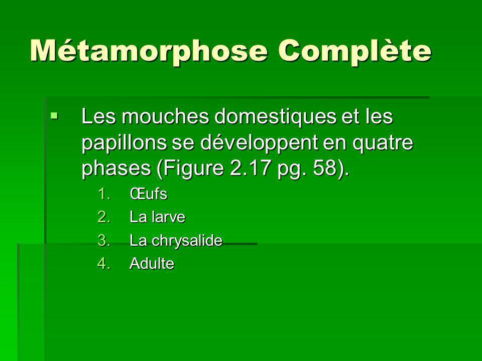 Métamorphose Complète