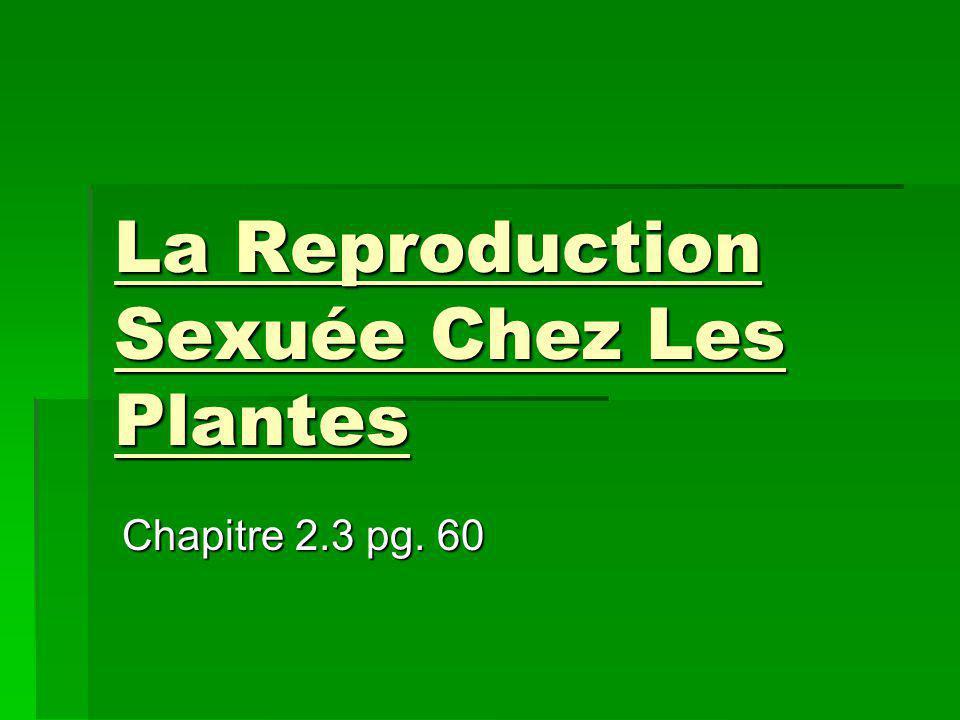 La Reproduction Sexuée Chez Les Plantes