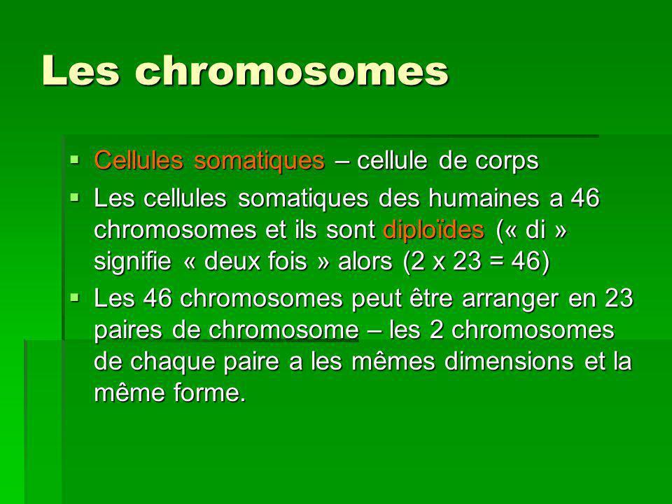 Les chromosomes Cellules somatiques – cellule de corps