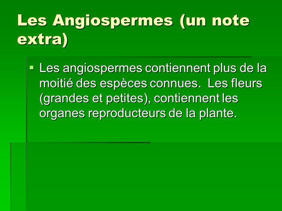 Les Angiospermes (un note extra)