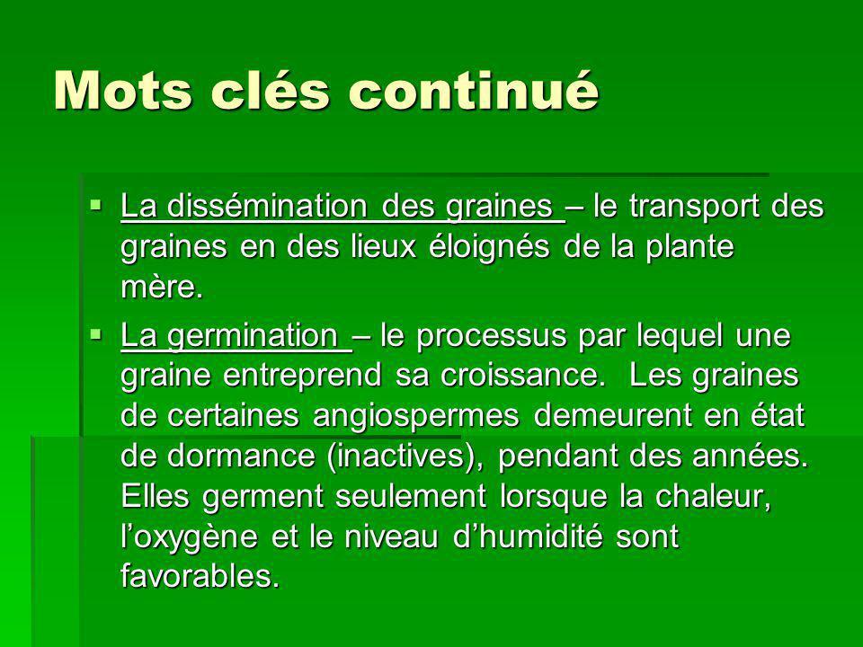 Mots clés continué La dissémination des graines – le transport des graines en des lieux éloignés de la plante mère.
