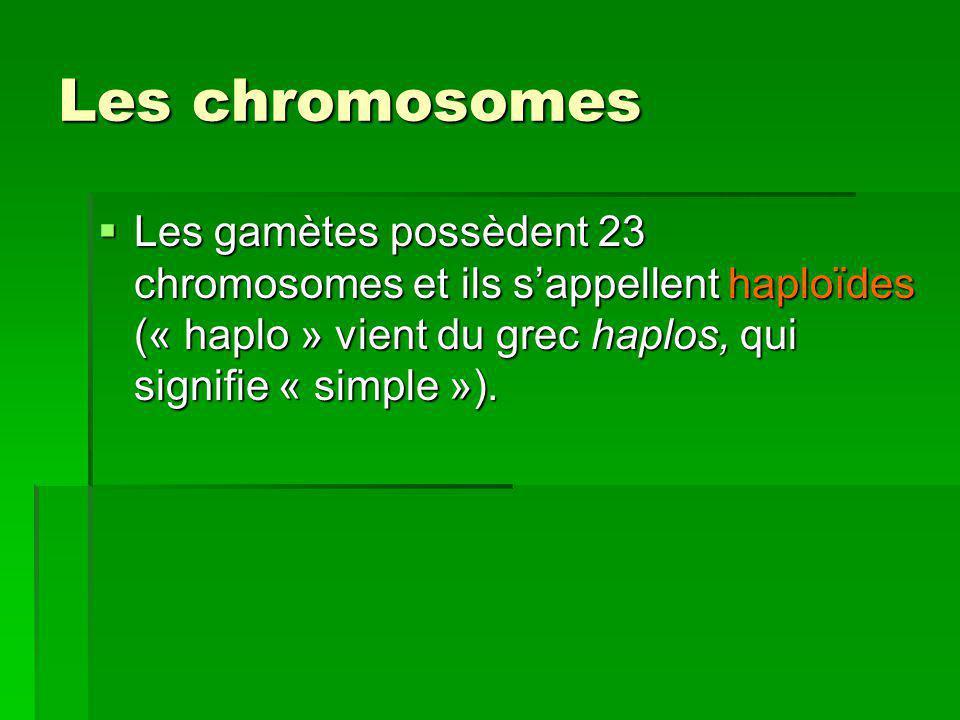 Les chromosomes Les gamètes possèdent 23 chromosomes et ils s'appellent haploïdes (« haplo » vient du grec haplos, qui signifie « simple »).