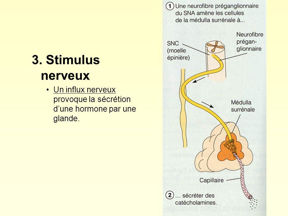 3. Stimulus nerveux Un influx nerveux provoque la sécrétion d'une hormone par une glande.
