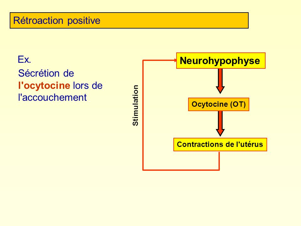Sécrétion de l ocytocine lors de l accouchement