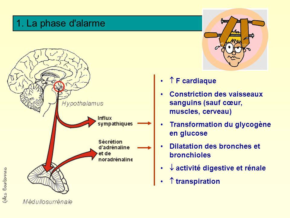 1. La phase d alarme  F cardiaque