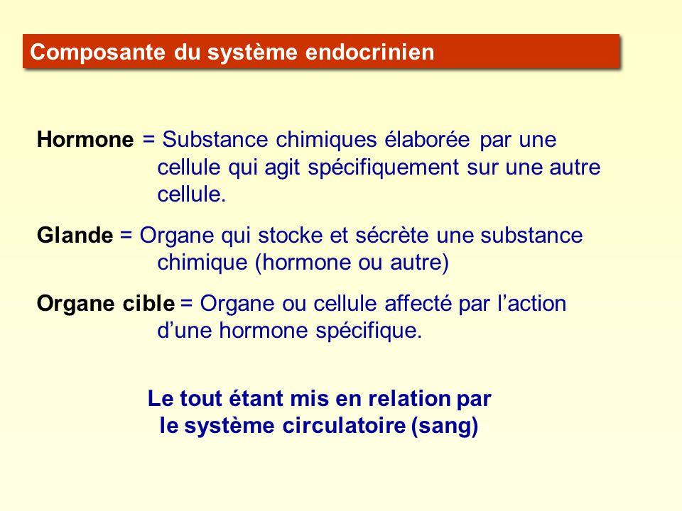 Le tout étant mis en relation par le système circulatoire (sang)