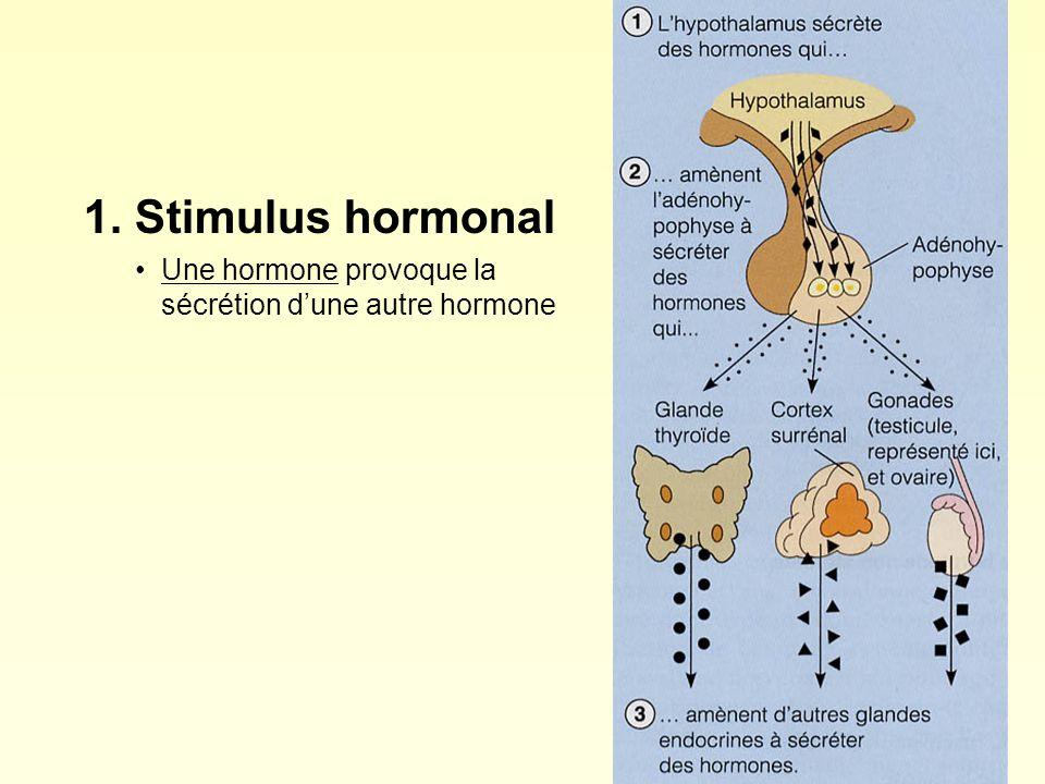 1. Stimulus hormonal Une hormone provoque la sécrétion d'une autre hormone