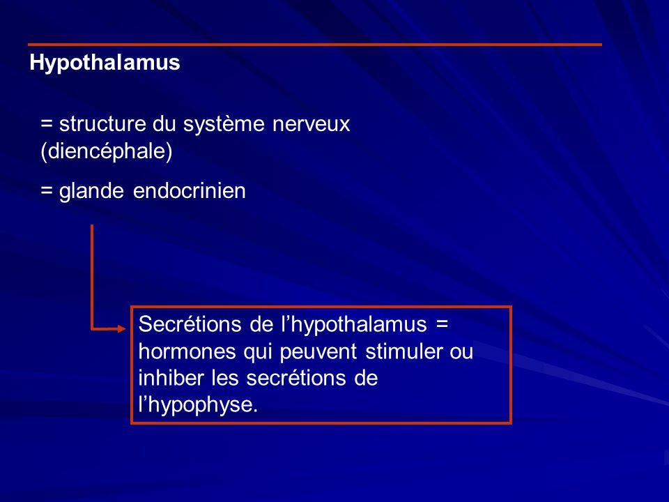 Hypothalamus = structure du système nerveux (diencéphale) = glande endocrinien.