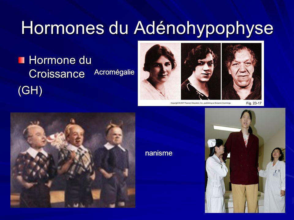 Hormones du Adénohypophyse
