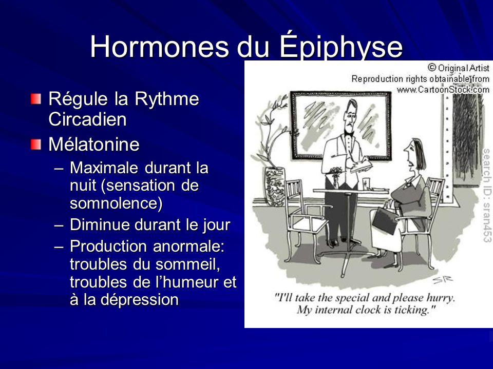 Hormones du Épiphyse Régule la Rythme Circadien Mélatonine
