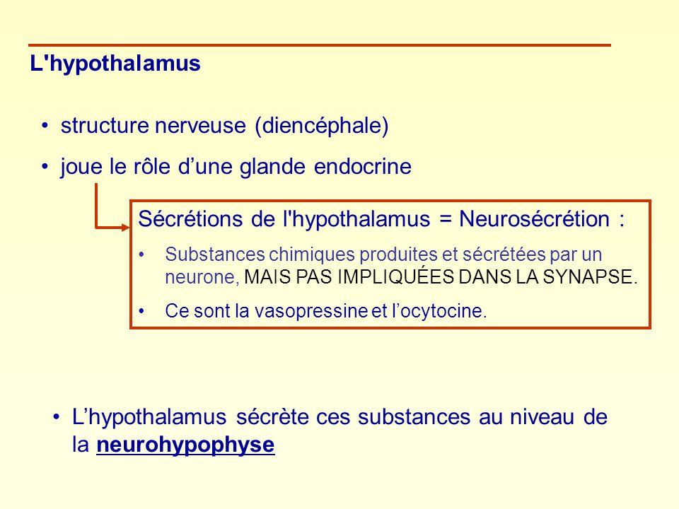 structure nerveuse (diencéphale) joue le rôle d'une glande endocrine
