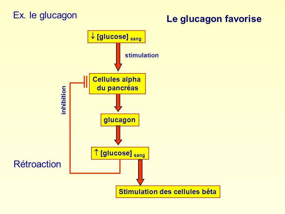 Cellules alpha du pancréas
