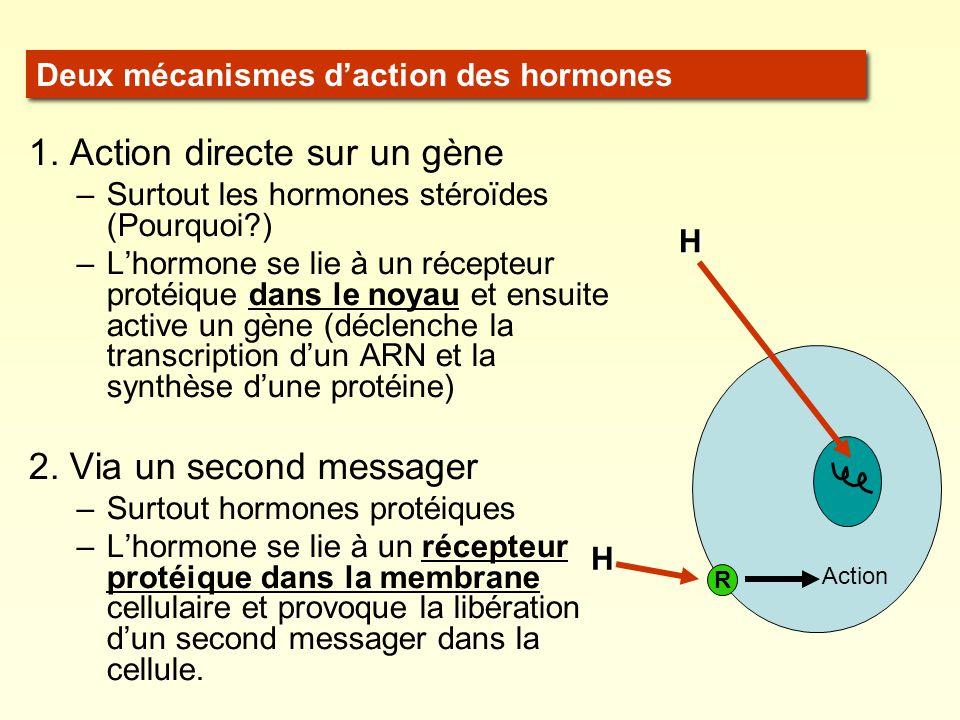 1. Action directe sur un gène