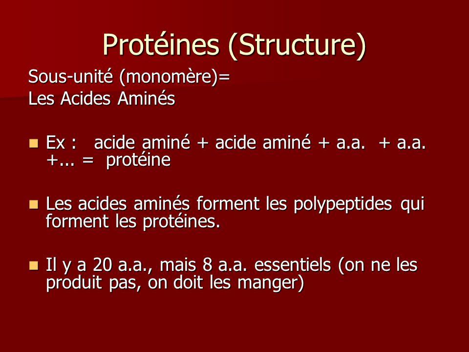 Protéines (Structure)