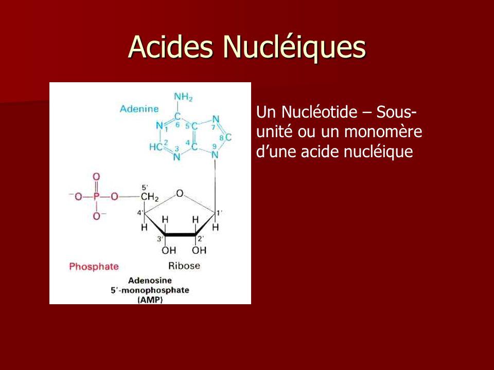 Acides Nucléiques Un Nucléotide – Sous-unité ou un monomère d'une acide nucléique