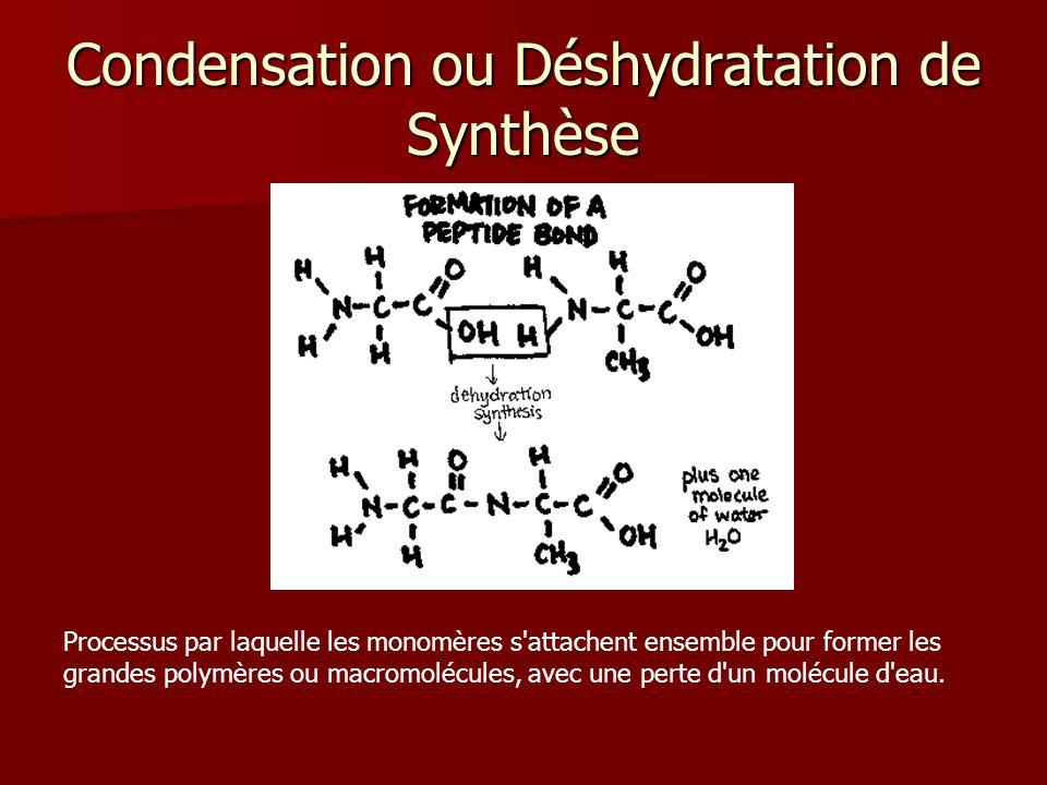 Condensation ou Déshydratation de Synthèse