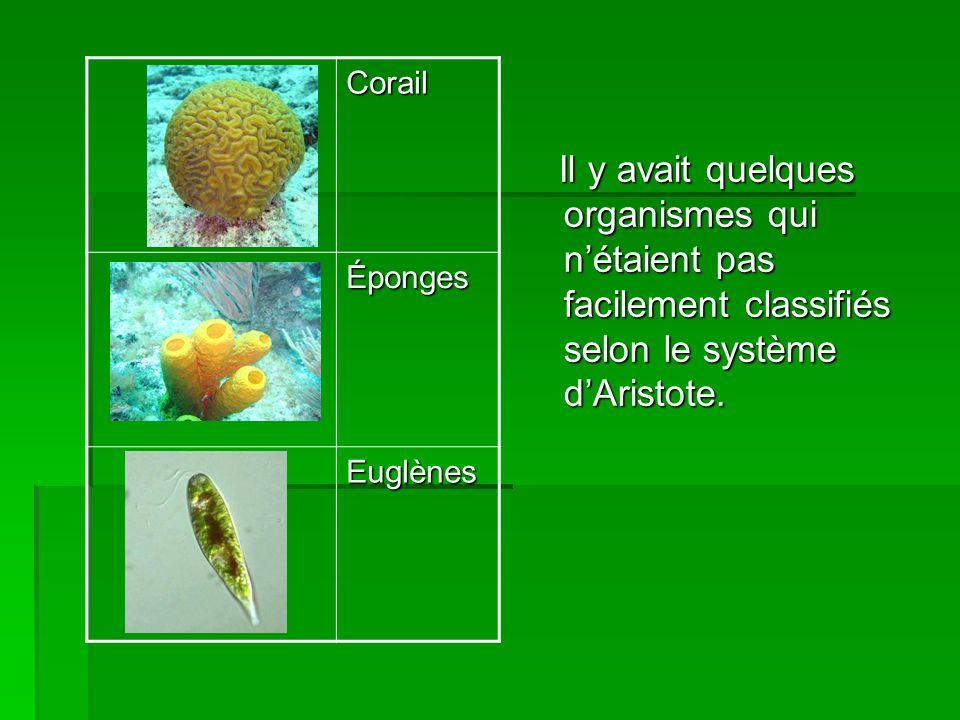 Corail Éponges. Euglènes.