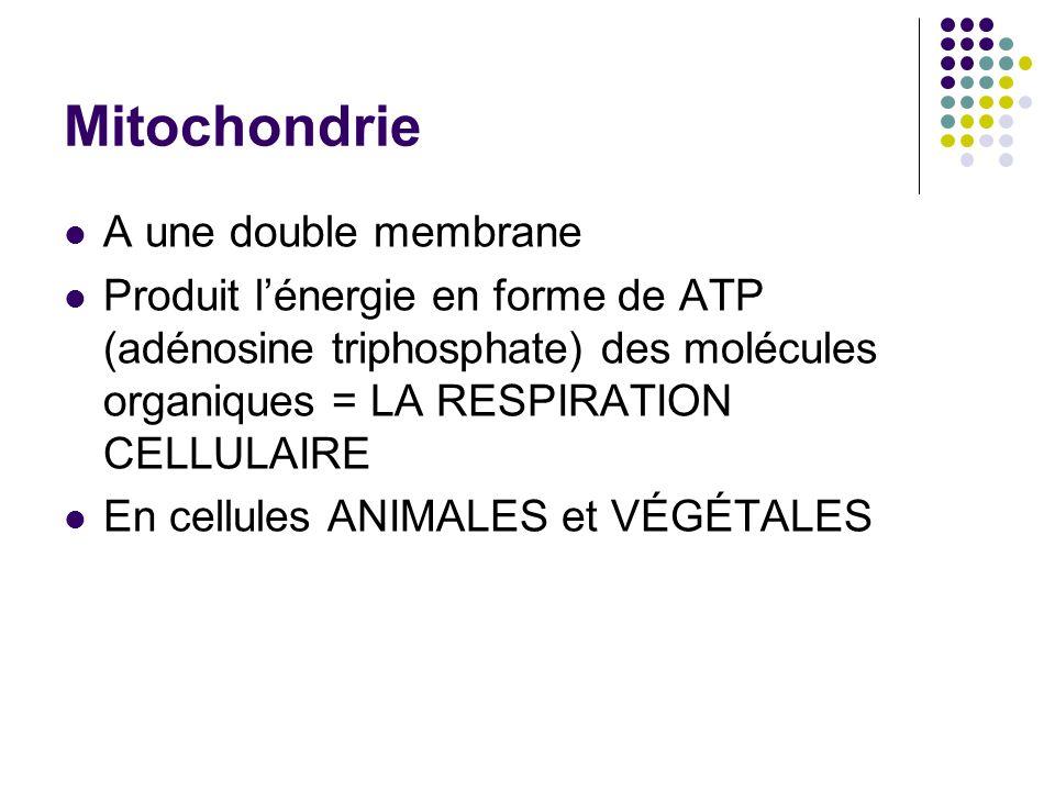 Mitochondrie A une double membrane