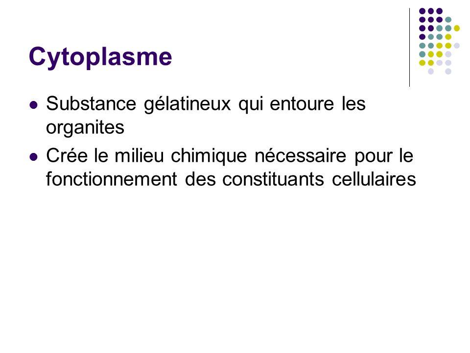 Cytoplasme Substance gélatineux qui entoure les organites