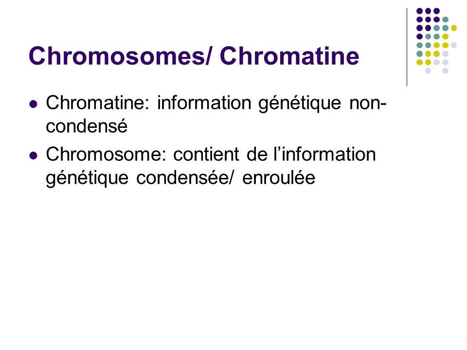 Chromosomes/ Chromatine
