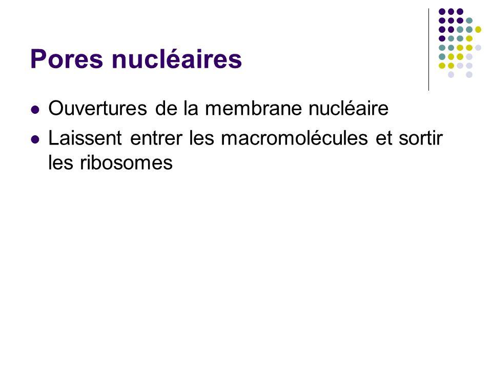 Pores nucléaires Ouvertures de la membrane nucléaire