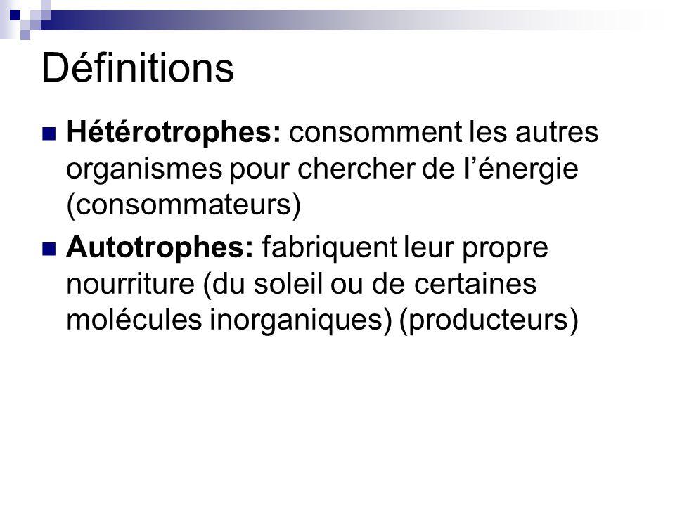 Définitions Hétérotrophes: consomment les autres organismes pour chercher de l'énergie (consommateurs)