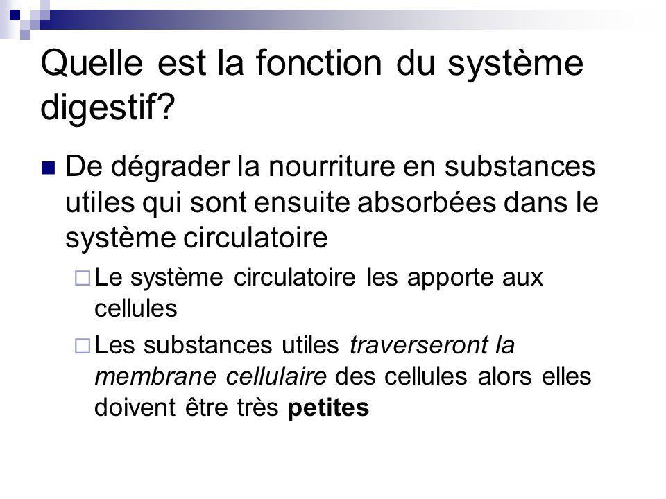 Quelle est la fonction du système digestif