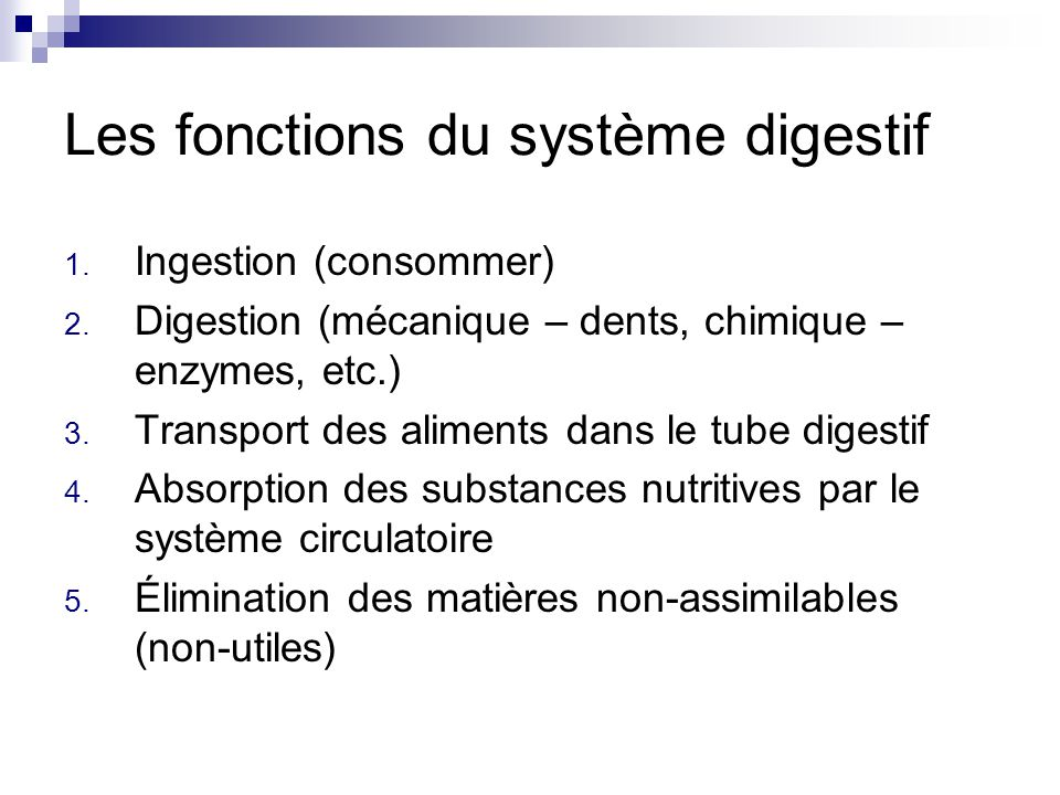 Les fonctions du système digestif