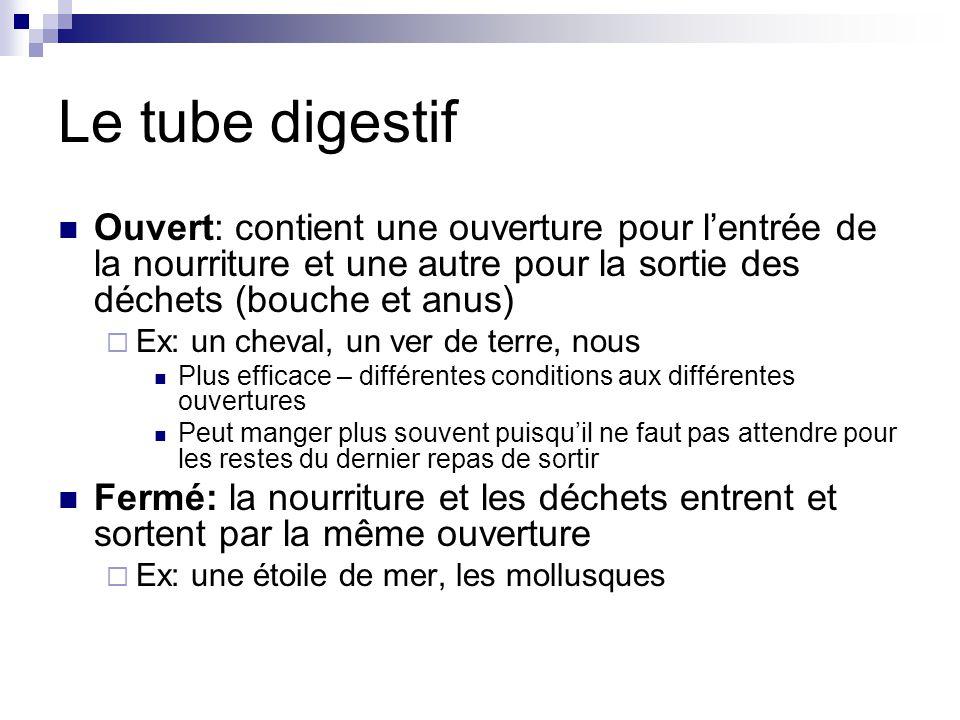 Le tube digestif Ouvert: contient une ouverture pour l'entrée de la nourriture et une autre pour la sortie des déchets (bouche et anus)