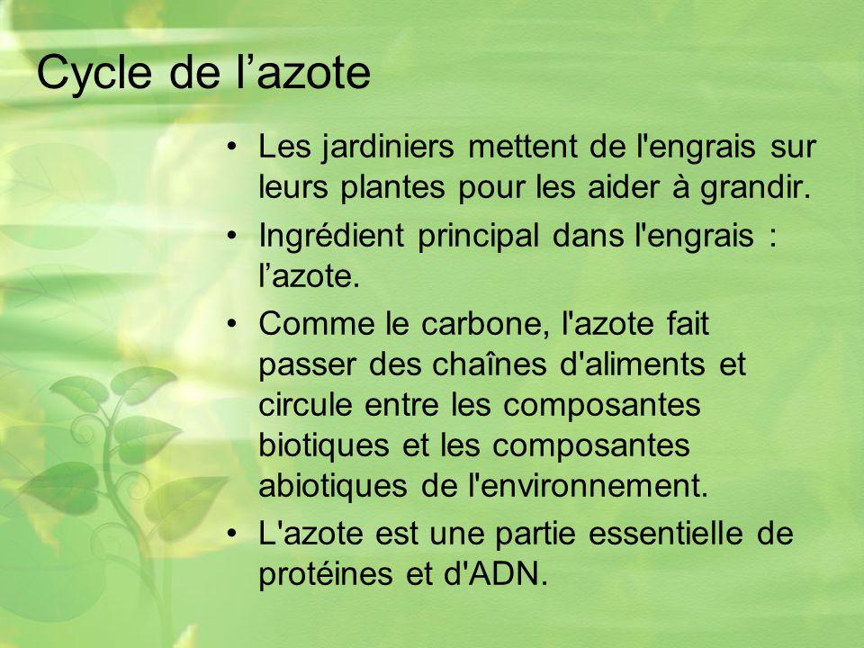 Cycle de l'azote Les jardiniers mettent de l engrais sur leurs plantes pour les aider à grandir. Ingrédient principal dans l engrais : l'azote.