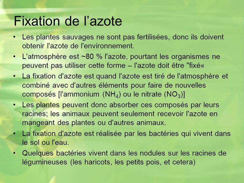 Fixation de l'azote Les plantes sauvages ne sont pas fertilisées, donc ils doivent obtenir l azote de l environnement.