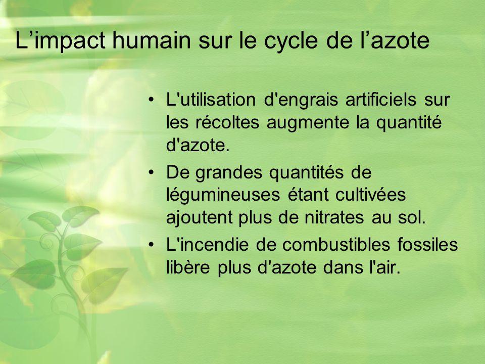 L'impact humain sur le cycle de l'azote
