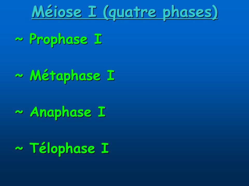 Méiose I (quatre phases)
