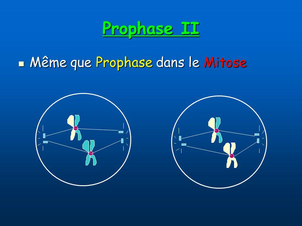 Prophase II Même que Prophase dans le Mitose