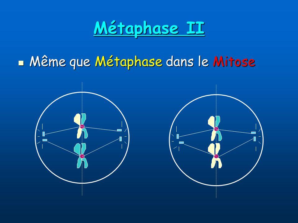 Métaphase II Même que Métaphase dans le Mitose