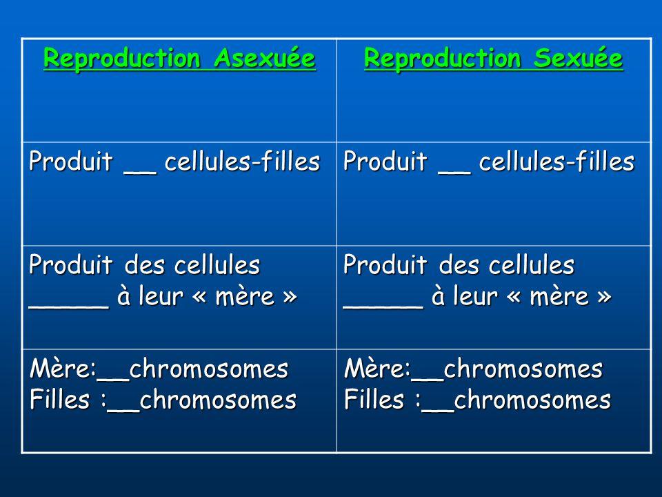 Reproduction Asexuée Reproduction Sexuée. Produit __ cellules-filles. Produit des cellules _____ à leur « mère »